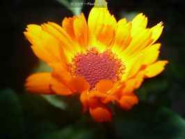 flower10 by Photoguy09