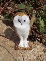 Woody barn owl by Katrileo