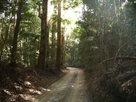 Trail in rainforest by CAStock