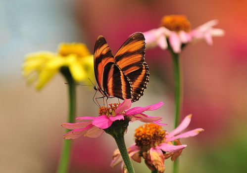 Butterfly Stock Two by 3whiteroses