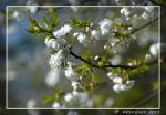 spring in white by bracketting94