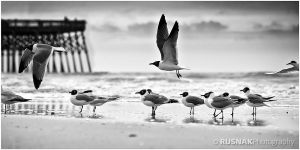 Flock of Seagulls by snak