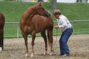 Chestnut Appaloosa Mare by suuslovertje