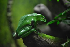 Green Frog by EtherLupus