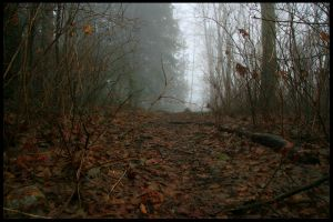 Burnaby Mountain In Fog XII by bcdirector