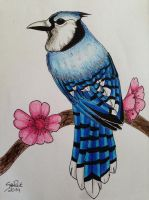 Blue Jay by SoReit