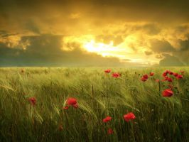 Fields of hope by moroka323