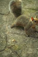 squirrely. by sweet-leaf