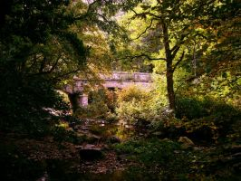 Forest bridge by GoblinStock