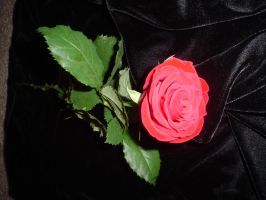 ..Red Rose One.. by Bloody-Kisses-STOCK
