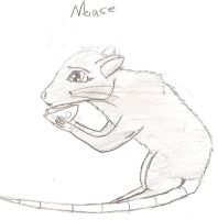 Mouse by Shorty-Greydragon