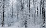 Frosty Trees by Pajunen