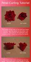 Petal Curling Tutorial by AnneliCyambl