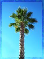 Generic Palm by Sushiman0001