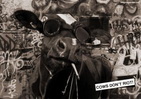 Cow Don't Riot by squiffythewombat