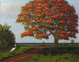 Royal Poinciana by KMAP3156