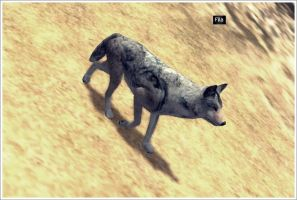 Wolf Quest - Cute . by Filax3