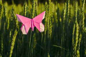 Butterfly #1 by perost