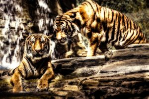 Land of the Tigers (300 Style) by RoyalImageryJax