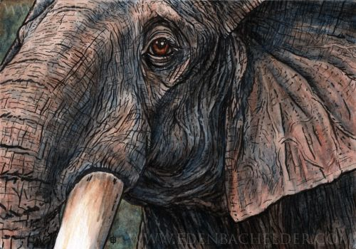Elephant ink and watercolour by shmeeden