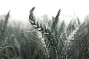 Moving Grain by Lennart-s