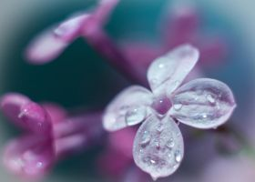 Lilac. by Eevl