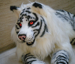 AWA 2011: White Tiger by NBCWerewolf