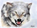 Snarling Wolf in snow by Patternintheivy