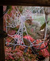 Soggy Webs by RickoDeCreme