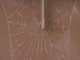 Frosty Spider Web 2 by Tech-Dave