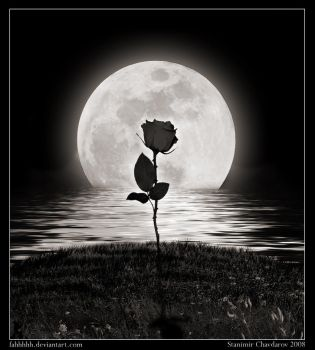 The lonely rose... by fahhhhh