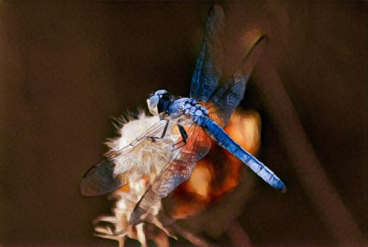 Blue Dasher Moment by Monkeystyle3000