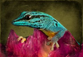 Gecko with textures by AngiWallace