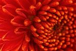 Flower Macro1 by Cable36wu