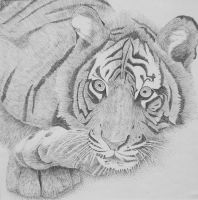 Black and White Tiger by Mizumi2004