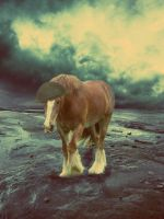 ::.War Horse.:: by Ruby288