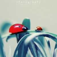 Close Encounters of the Ladybug Kind by JeanFan