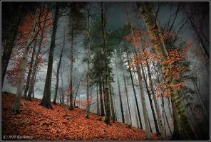 Beech forest II by Dark-Raptor