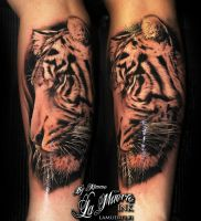 Realistic tiger by KimAnger