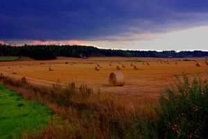 Harvest i by ximocampo