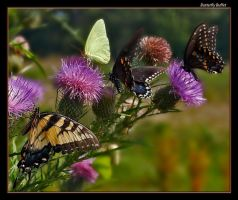 Butterfly Buffet by boron