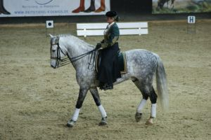 Grey Andalusian walk sideview by EndingStories