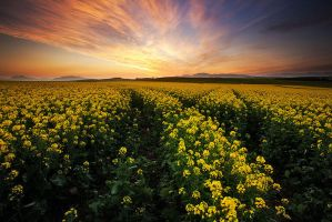 Overberg Bliss by hougaard