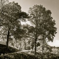 Infrared trees on film.img.659 by harrietsfriend
