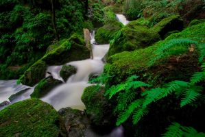 Ferns and Water by themobius