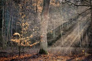 Last autumn rays by tomsumartin