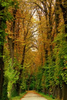 the road of autumn by anmaria
