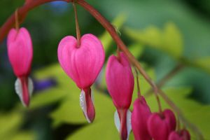 Bleeding Hearts by TheDandyMarble