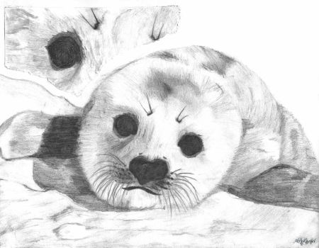 Baby Seal by RacsterArt