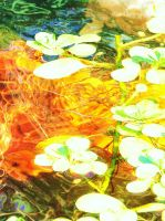 Magic in a Pond 3 by Alohalanilove